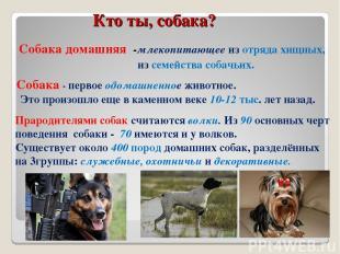 Кто ты, собака? Собака домашняя -млекопитающее из отряда хищных, из семейства со