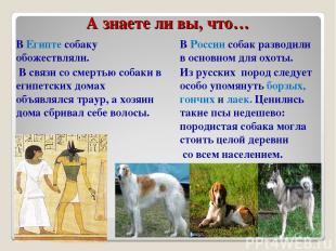 А знаете ли вы, что… В Египте собаку обожествляли. В связи со смертью собаки в е