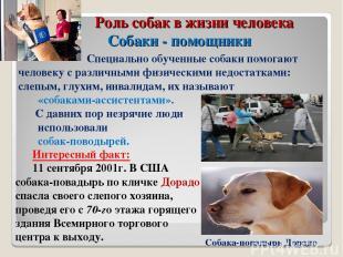Роль собак в жизни человека Собаки - помощники Специально обученные собаки помог