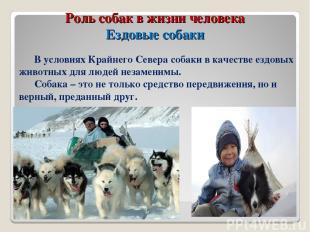 Роль собак в жизни человека Ездовые собаки В условиях Крайнего Севера собаки в к