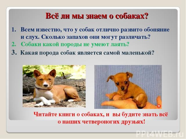 Всё ли мы знаем о собаках? Всем известно, что у собак отлично развито обоняние и слух. Сколько запахов они могут различать? 2. Собаки какой породы не умеют лаять? 3. Какая порода собак является самой маленькой? Читайте книги о собаках, и вы будите з…