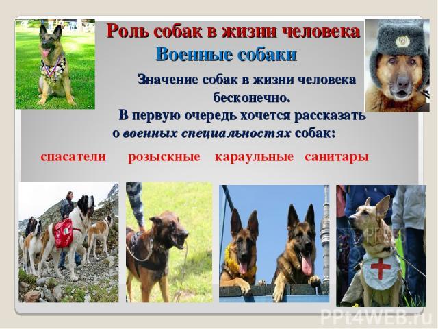 Роль собак в жизни человека Военные собаки Значение собак в жизни человека бесконечно. В первую очередь хочется рассказать о военных специальностях собак: спасатели розыскные караульные санитары