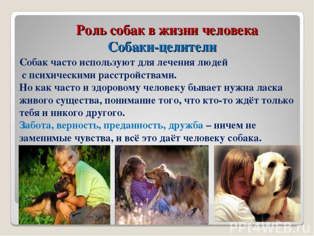 Роль собак в жизни человека Собаки-целители Собак часто используют для лечения людей с психическими расстройствами. Но как часто и здоровому человеку бывает нужна ласка живого существа, понимание того, что кто-то ждёт только тебя и никого другого. З…