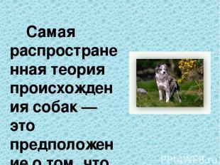 Самая распространенная теория происхождения собак — это предположение о том, что