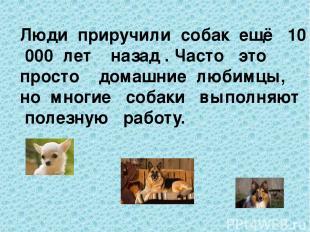 Люди приручили собак ещё 10 000 лет назад . Часто это просто домашние любимцы, н