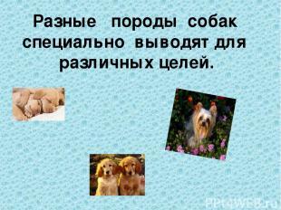Разные породы собак специально выводят для различных целей.