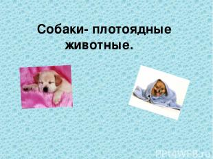 Собаки- плотоядные животные.