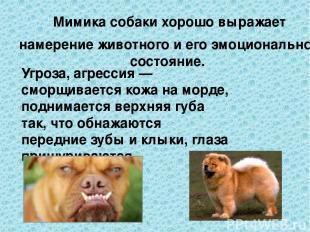 Мимика собаки хорошо выражает намерение животного и его эмоциональное состояние.