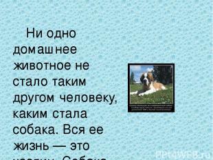 Ни одно домашнее животное не стало таким другом человеку, каким стала собака. Вс