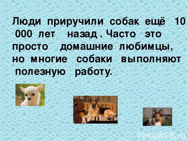 Люди приручили собак ещё 10 000 лет назад . Часто это просто домашние любимцы, но многие собаки выполняют полезную работу.