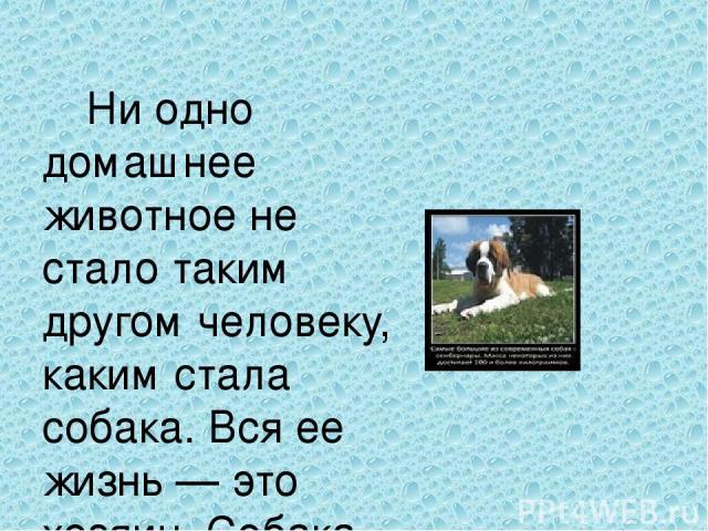 Ни одно домашнее животное не стало таким другом человеку, каким стала собака. Вся ее жизнь — это хозяин. Собака разделит и счастье, и горе, всегда будет радостно встречать у порога дома и никогда, ни в чем не упрекнет своего хозяина и друга.