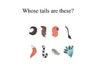 Whose tails are these?