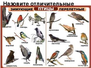 Назовите отличительные особенности птиц.