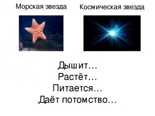 Дышит… Растёт… Питается… Даёт потомство… Морская звезда Космическая звезда