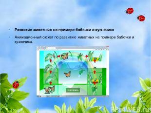 Развитие животных на примере бабочки и кузнечика Анимационный сюжет по развитию