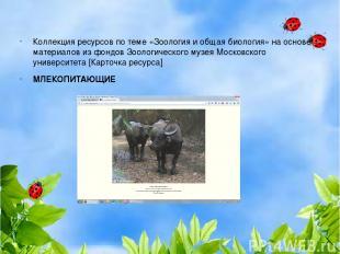 Коллекция ресурсов по теме «Зоология и общая биология» на основе материалов из ф
