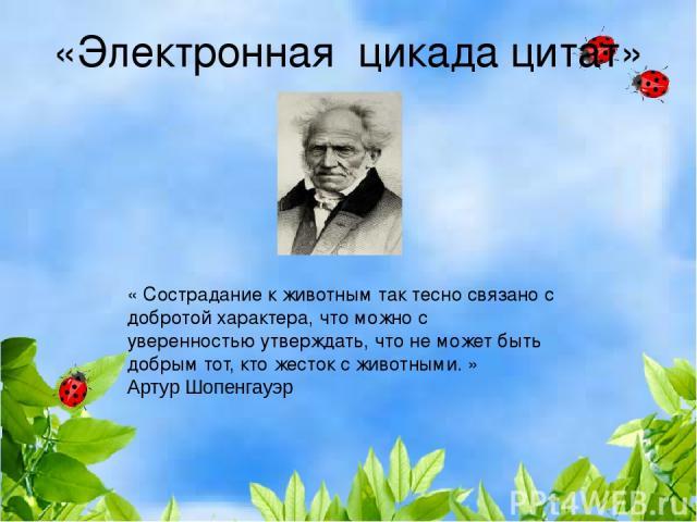 «Электронная цикада цитат» «Сострадание кживотным так тесно связано с добротой характера, что можно с уверенностью утверждать, что не может быть добрым тот, кто жесток с животными.» Артур Шопенгауэр