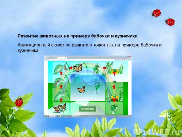 Развитие животных на примере бабочки и кузнечика Анимационный сюжет по развитию животных на примере бабочки и кузнечика.