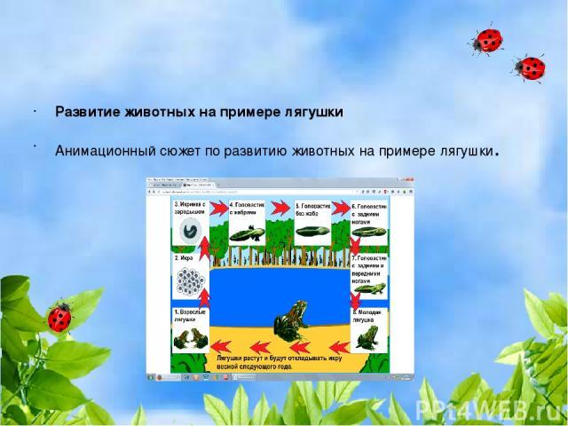 Развитие животных на примере лягушки Анимационный сюжет по развитию животных на примере лягушки.