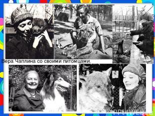 Вера Чаплина со своими питомцами.