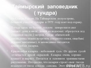Таймырский заповедник ( тундра) На Севере России. На Таймырском полуострове, бол