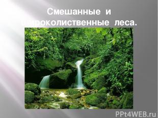 Смешанные и широколиственные леса.