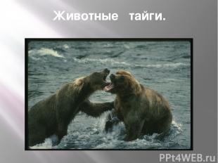 Животные тайги.