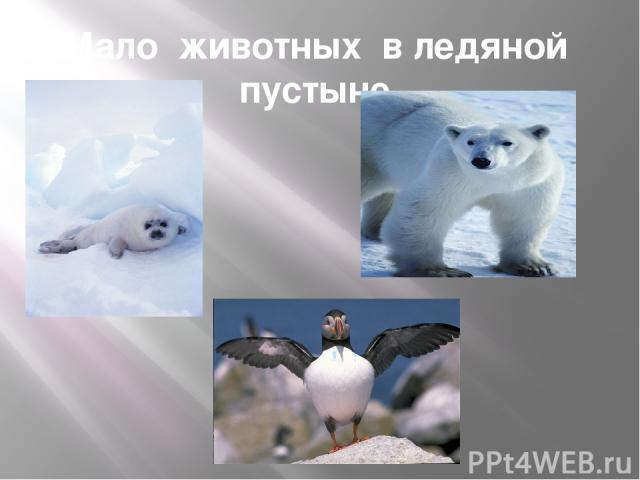 Мало животных в ледяной пустыне.