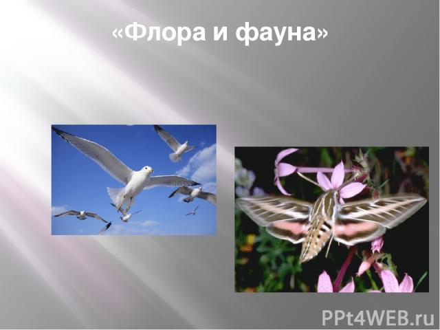 «Флора и фауна»