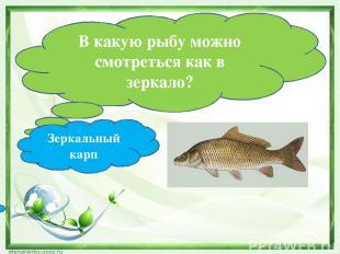 В какую рыбу можно смотреться как в зеркало? Зеркальный карп