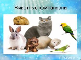 Животные-компаньоны