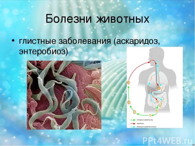 Болезни животных глистные заболевания (аскаридоз, энтеробиоз)