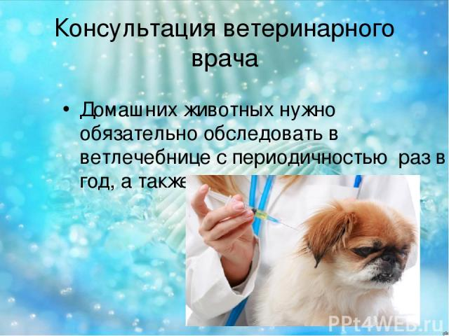 Консультация ветеринарного врача Домашних животных нужно обязательно обследовать в ветлечебнице с периодичностью раз в год, а также делать прививки.