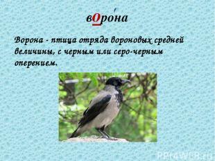 ворона Ворона - птица отряда вороновых средней величины, с черным или серо-черны