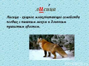 лисица Лисица - хищное млекопитающее семейства псовых с пышным мехом и длинным п