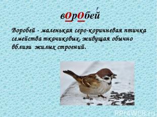 воробей Воробей - маленькая серо-коричневая птичка семейства ткачиковых, живущая