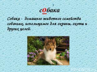 собака Собака - домашнее животное семейства собачьих, используемое для охраны, о
