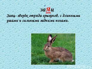 заяц Заяц- зверёк отряда грызунов, с длинными ушами и сильными задними ногами.