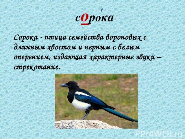 сорока Сорока - птица семейства вороновых с длинным хвостом и черным с белым оперением, издающая характерные звуки – стрекотание.