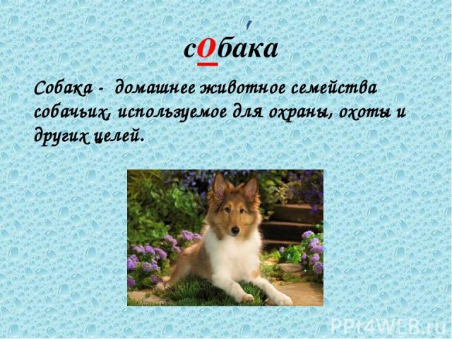 собака Собака - домашнее животное семейства собачьих, используемое для охраны, охоты и других целей.