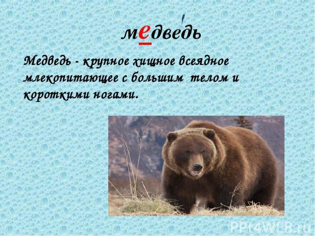 медведь Медведь - крупное хищное всеядное млекопитающее с большим телом и короткими ногами.