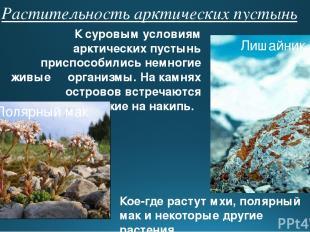 Растительность арктических пустынь К суровым условиям арктических пустынь приспо