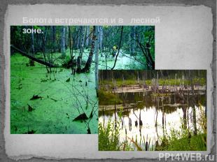 Болота встречаются и в лесной зоне.
