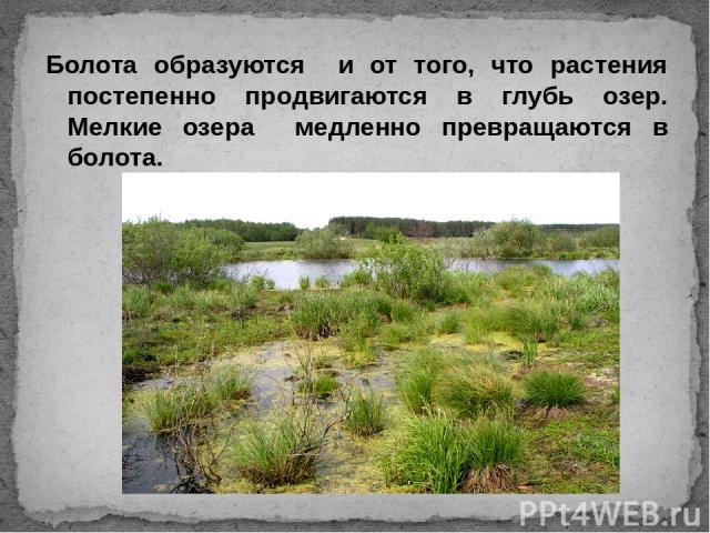 Болота образуются и от того, что растения постепенно продвигаются в глубь озер. Мелкие озера медленно превращаются в болота.