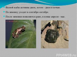 Весной жабы активны днем, летом - днем и ночью. На зимовку уходят в сентябре-окт