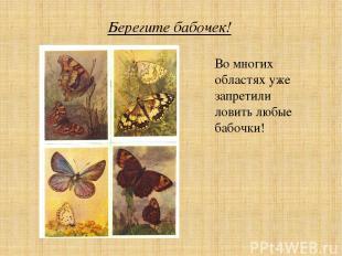 Берегите бабочек! Во многих областях уже запретили ловить любые бабочки!