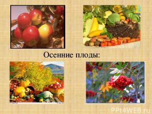 Осенние плоды: