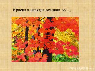 Красив и наряден осенний лес…