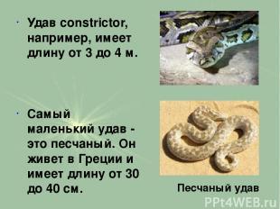 Удав constrictor, например, имеет длину от 3 до 4 м. Самый маленький удав - это