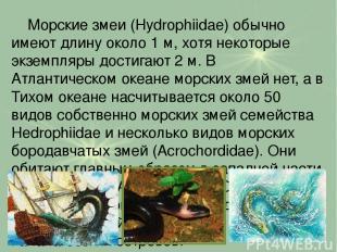 Морские змеи (Hydrophiidae) обычно имеют длину около 1 м, хотя некоторые экземпл